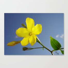 Yellow Jasmine Flower and Bud Against Blue Sky Canvas Print