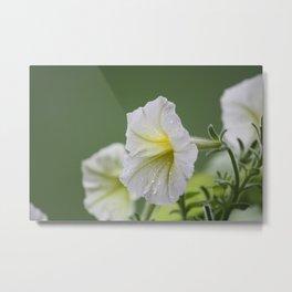 Creamy Petunia Metal Print