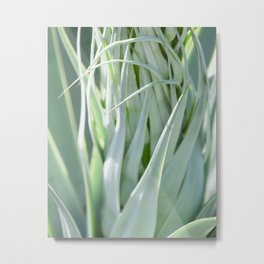 Smooth Cactus Core Metal Print