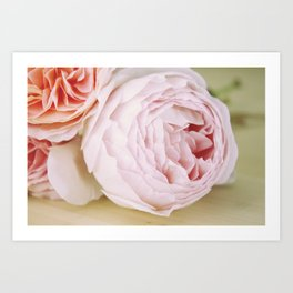 Early Roses Art Print