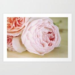 Early Roses Art Print