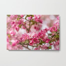 Bright Pink Crabapple Blossoms Metal Print