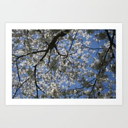Apple Blossom Sky Art Print