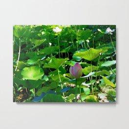 Lotus #2 Metal Print