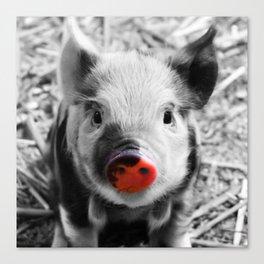 BW splash sweet piglet Canvas Print