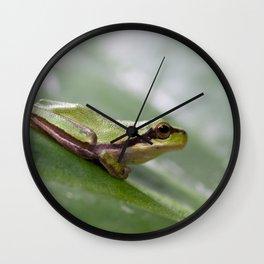 Mediterranean Tree Frog 1095 Wall Clock