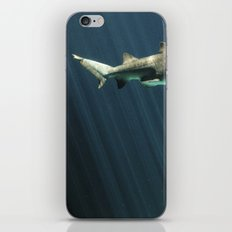 Shark iPhone Skin