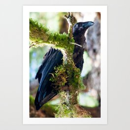 Ever Watchful Raven Art Print