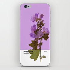 PANTONE 529 U iPhone & iPod Skin