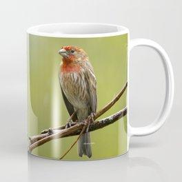 House Finch in the Rain Coffee Mug