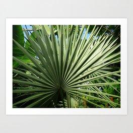 Fan Palm Art Print