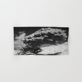 Bending Cypress Black and White Photographic Picture Hand & Bath Towel
