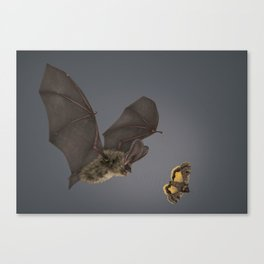 Brown Long-eared Bat Canvas Print