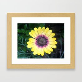 Outer Beauty Framed Art Print