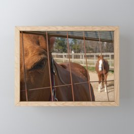 Fenced In Animal / Horse Photograph Framed Mini Art Print