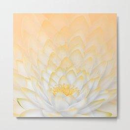 White Peach Lotus Metal Print