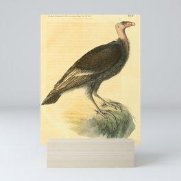 sarcoramphus californianus8 Mini Art Print