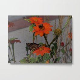 Bumble Bee and Monarch Butterfly Sharing Pollination Duties Metal Print