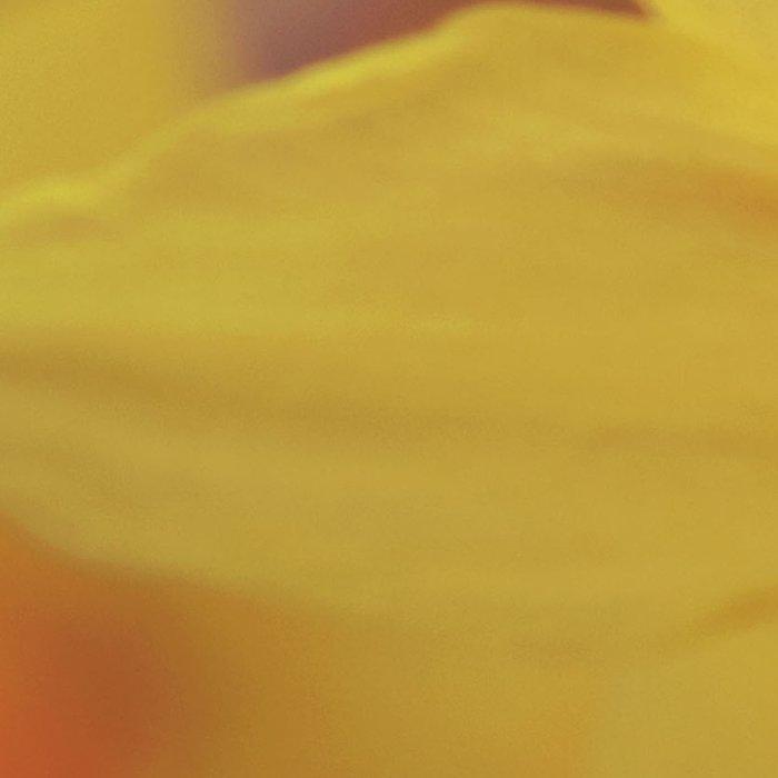 Yellow Narcissus #2 Leggings