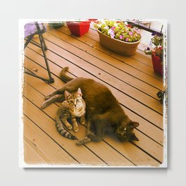 Cat days of summer? Metal Print