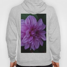 Purple Haze Hoody