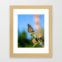 Monarch Visitor Framed Art Print