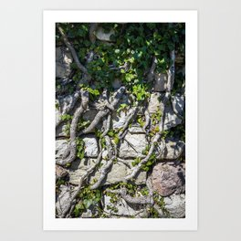 wall of vines Art Print