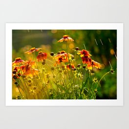 Greeting the Summer Rain Art Print
