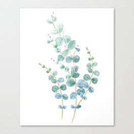 Watercolor Illustration of eucalyptus Canvas Print