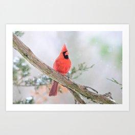 """Say What?"" (Northern Cardinal) Art Print"