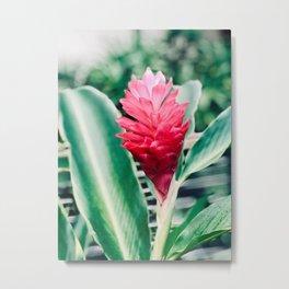 Tropical Ginger Metal Print