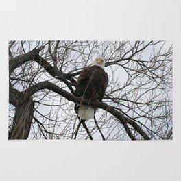Bald Eagle Stare Down Rug