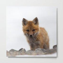 Watercolor Fox, Red Fox 42, Union Reservoir, Boulder County Metal Print