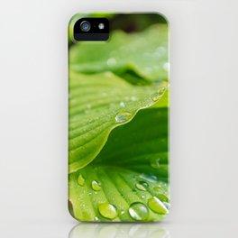 Hosta Leaves. Raindrops iPhone Case