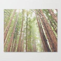 Giant Redwoods Canvas Print