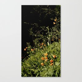 Wild Tiger Lilly Canvas Print