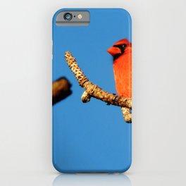 Beautiful cardinal iPhone Case