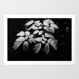 Monochrome Droplet Art Print