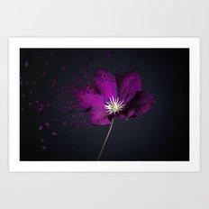 Clematis Explosion Art Print