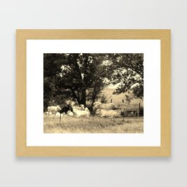 Charolais Family Cattle Photo Framed Art Print