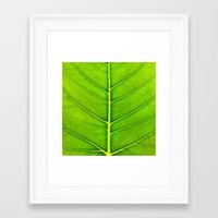 leaf Framed Art Prints featuring Leaf by Patterns and Textures