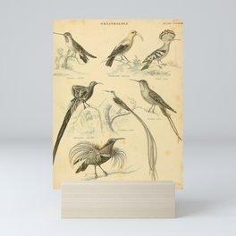 Vintage Bird Mini Art Print