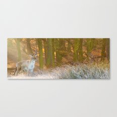 Deer in Richmond Canvas Print