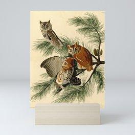 Little Screech Owl Mini Art Print