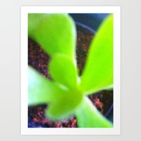 cactus burst I Art Print