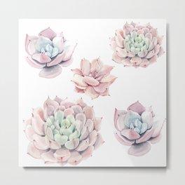 Pink Succulents Metal Print