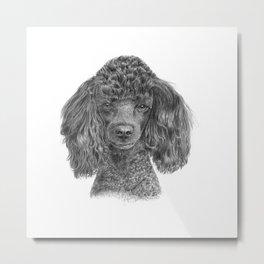 Poodle - black Metal Print