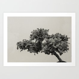 Bonsai III Art Print