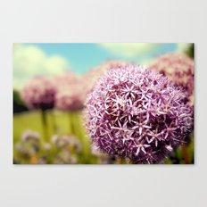 Alliumns Canvas Print