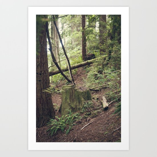 A walk in the Redwoods Art Print
